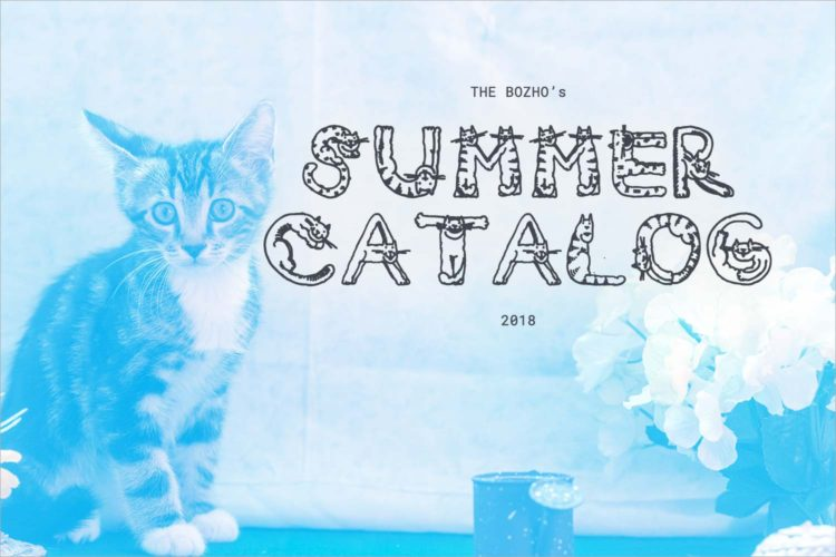 Meet some adoptable kittens to add to your home this summer