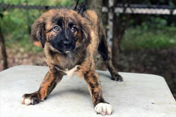 Meet 7 new adoptable dogs from China