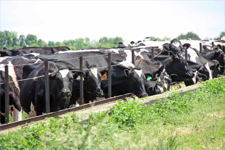 Farm Aid concert to visit Wisconsin as dairy farms go extinct